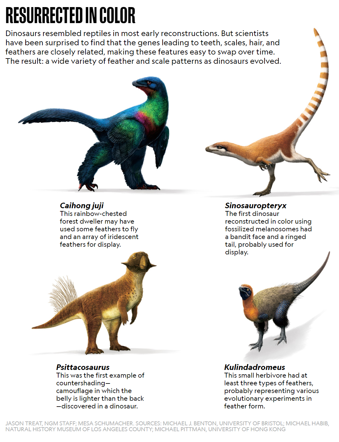 four dinosaurs covered in feathers