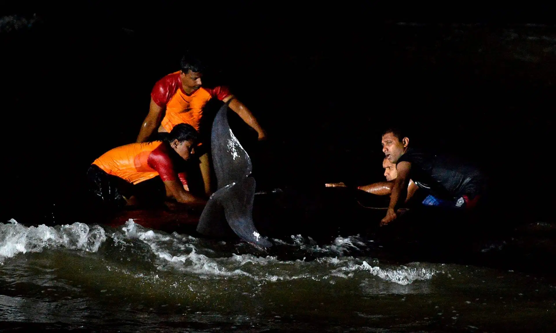 people in surf rescuing whales