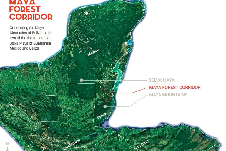 map of forest in Central America