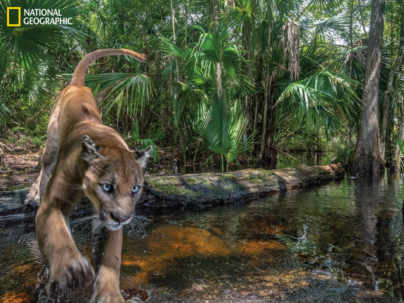 panther crossing river