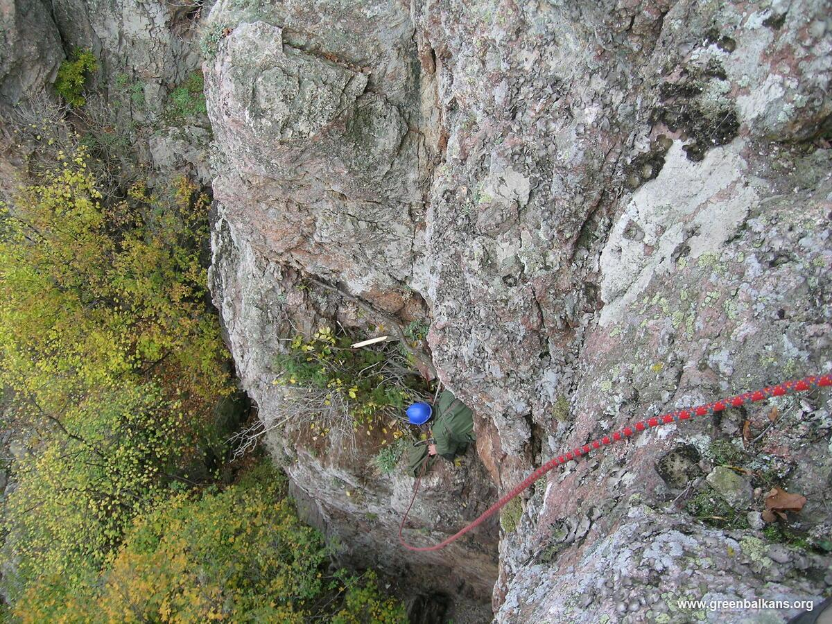person making nest on cliff